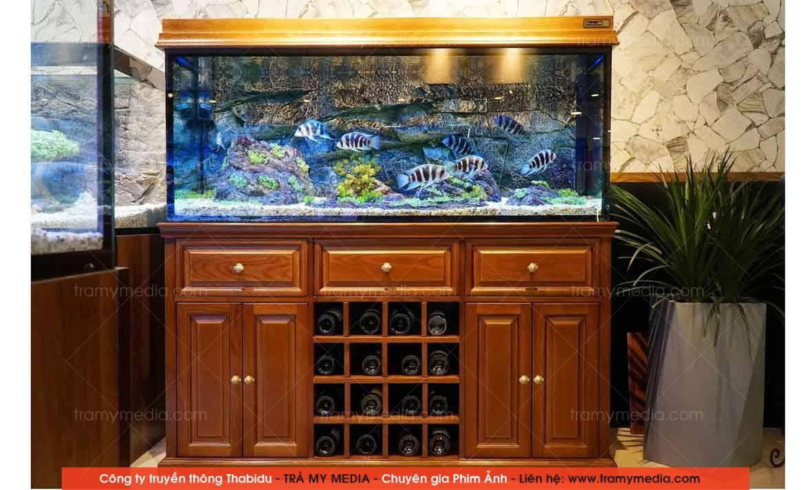 Chụp ảnh sản phẩm Bể Cá Blue Luxury 10