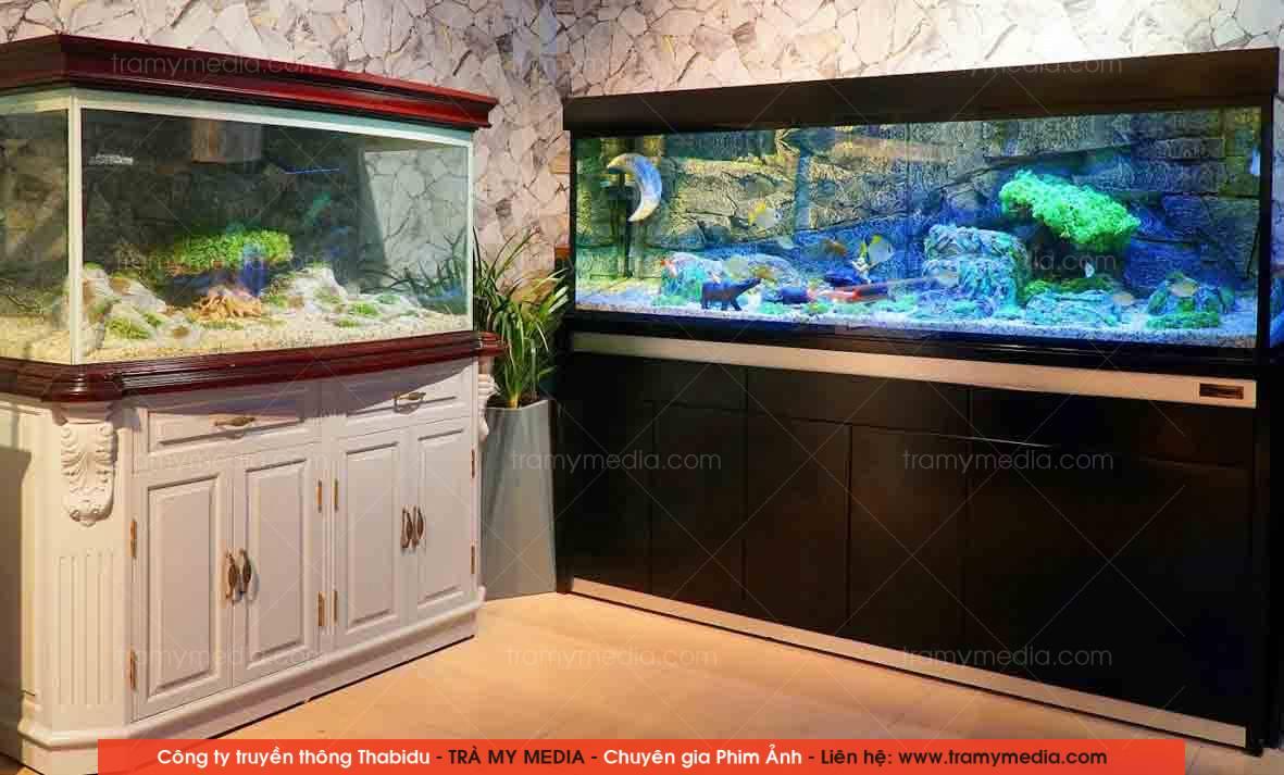 Chụp ảnh sản phẩm Bể Cá Blue Luxury 12
