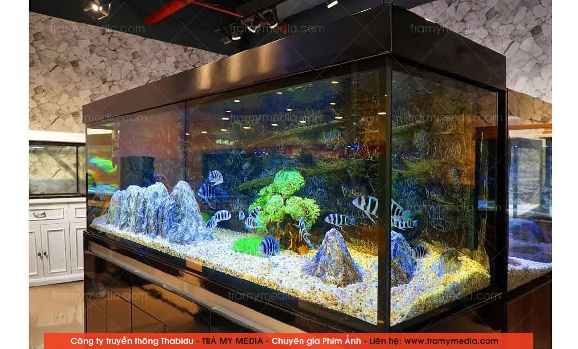 Chụp ảnh sản phẩm Bể Cá Blue Luxury 8