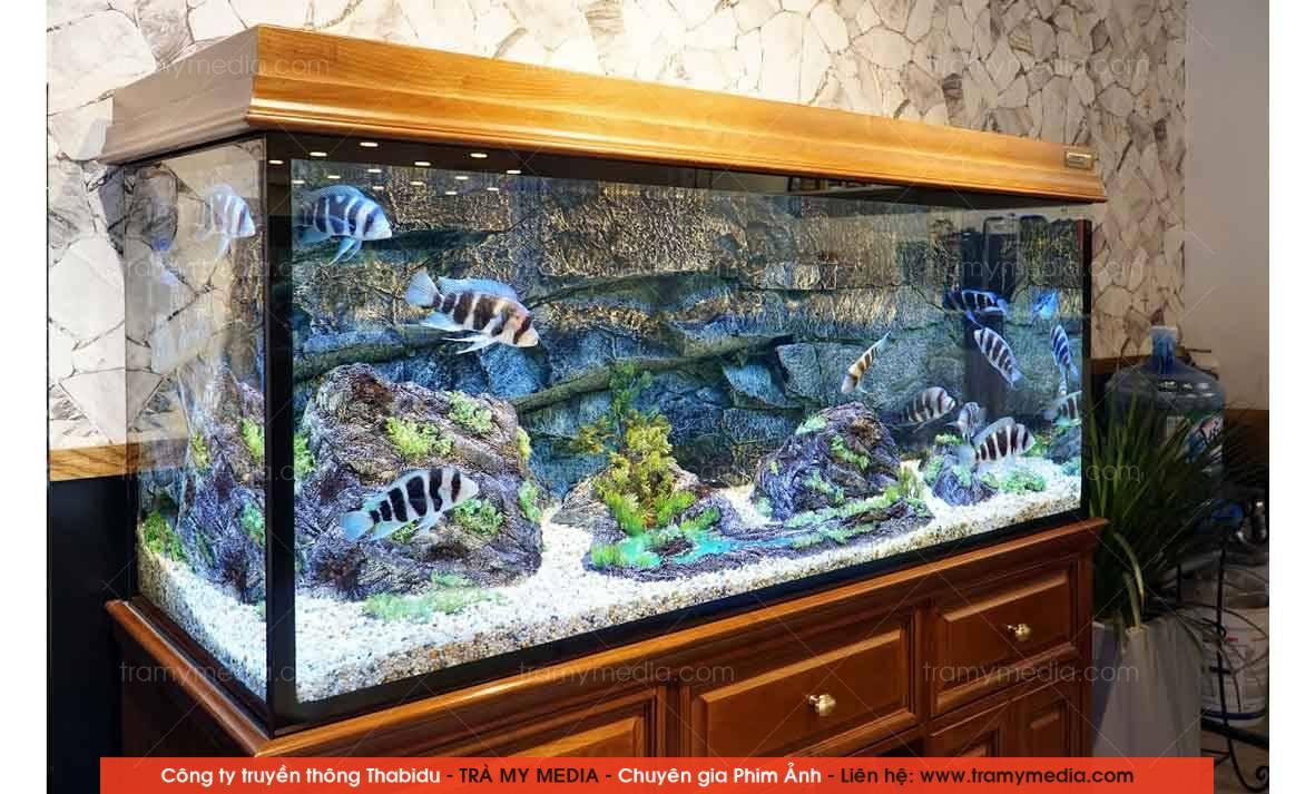 Chụp ảnh sản phẩm Bể Cá Blue Luxury 9
